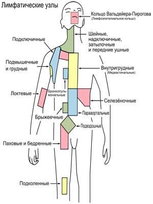 лимфатических узлов