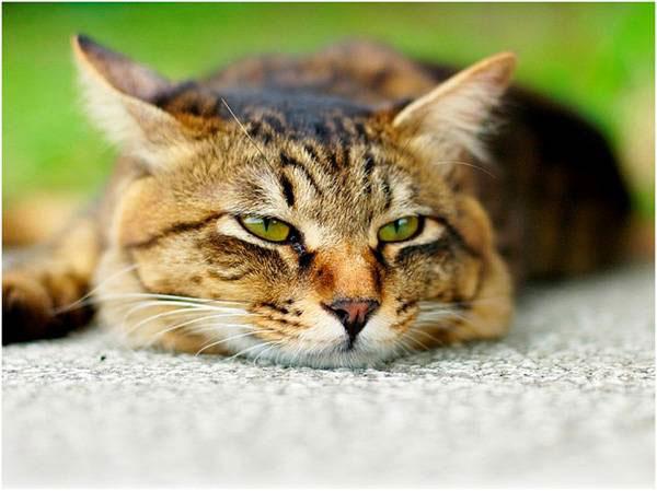 Камни в почках лечение котов