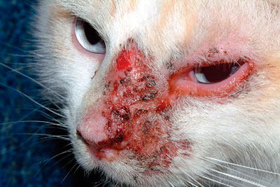 Фото аллергия у кота