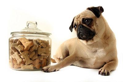 Особенности пищевой аллергии у собак