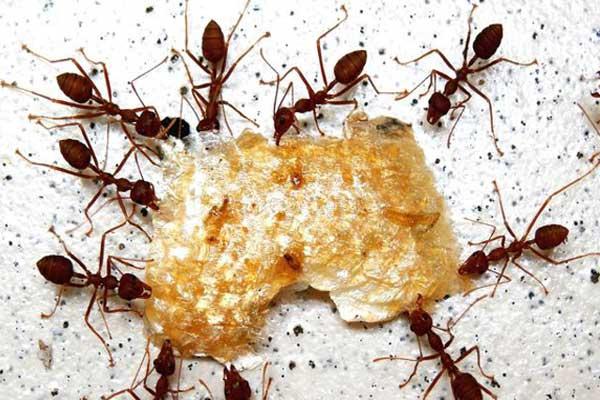 На фото: муравьи это настоящие хищники