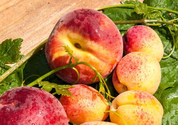 Польза абрикосов и персиков