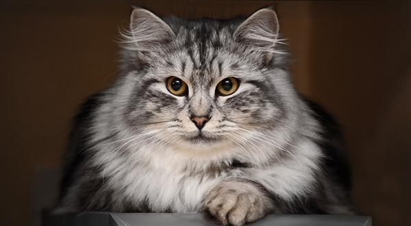 как обрабатывать кошачий укус