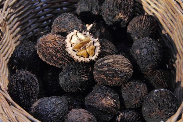Черный орех: полезные свойства
