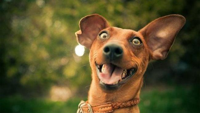 Как успокоить собаку, проявляющую признаки гиперактивности