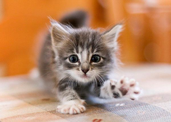 что делать, если котенок кусается