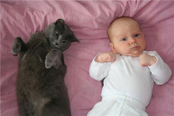Кошка и новорожденный