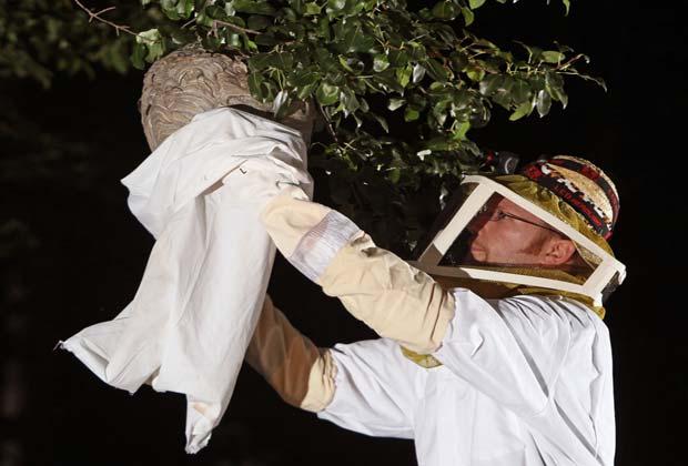 уничтожение гнезда ос на дереве в саду