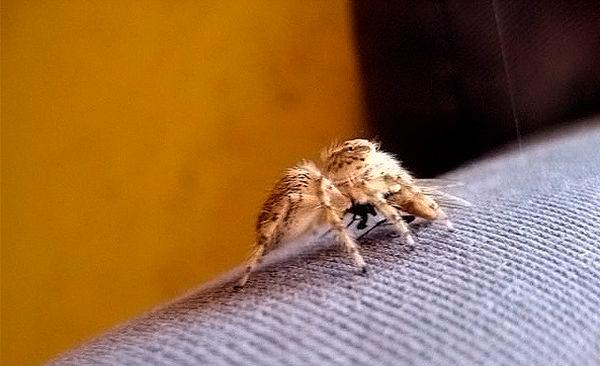 Укусы пауков и комаров
