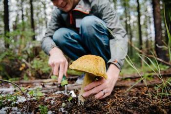 Потребление грибов снижает риск деменции