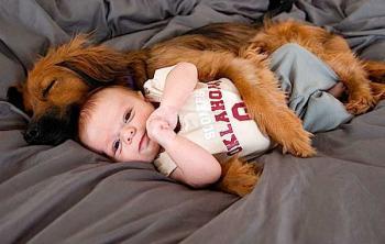 Собака спит с ребёнком