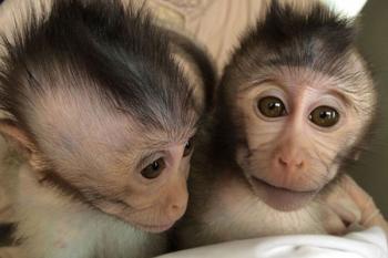 В Китае создали обезьян аутистов фото technologyreview