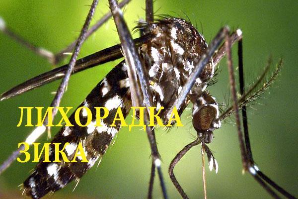 Лихорадка Зика подробности про опасный вирус
