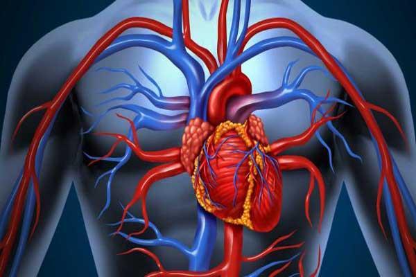 Проблемы сердца - застойная сердечная недостаточность, симптомы на теле, симптомы здоровья