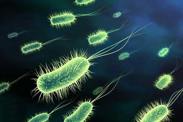 Бактерии листериоза Listeria monocytogenes