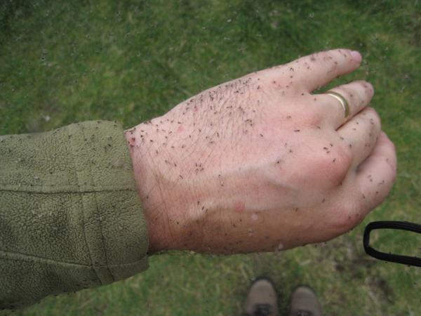 Аллергия на укусы насекомых: симптомы, лечение
