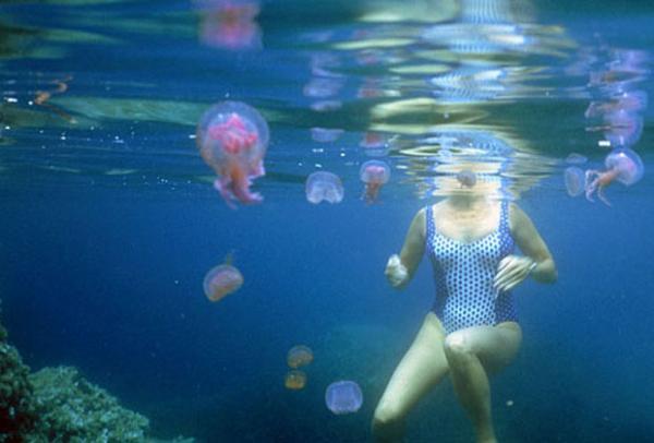 Лучшая профилактика укуса медуз - не плавать там, где много медуз