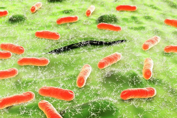 Энтеробактерии и связанные с ними инфекции