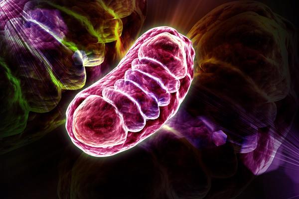 Митохондриальные заболевания: причины, симптомы, диагностика