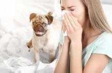 аллергия на собаку