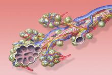 Клетки легких