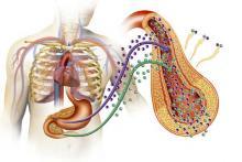 Диабет - сахарный и несахарный, различия
