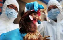 Птичий грипп