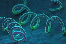 Лечить сифилис нужно обязательно, промедление грозит серьезными последствиями