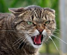 как уберечься от укуса кошки
