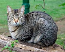 инфекция от кошачьего укуса опасна для человека