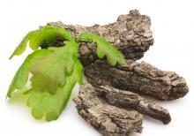 Кора дуба: лечебные свойства, применение и противопоказания