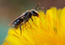 как удалить опухоль от укуса пчелы