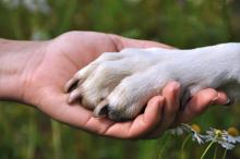 Как воспитать собаку и приучить ее к дисциплине