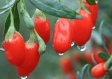 Ягоды годжи: полезные свойства