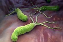 Бактерии, которые вызывают гастроэнтерит