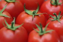 красивые томаты - но аллергия